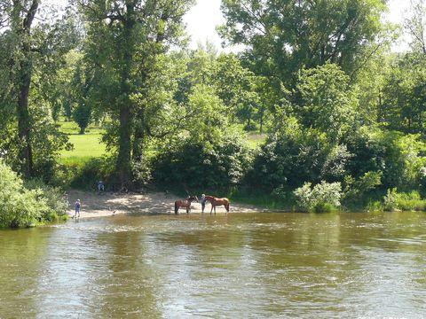 plavení koní na Vltavě