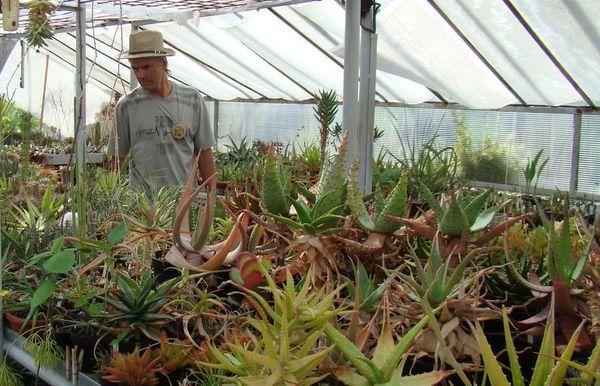 Mirek Břenda u svých kaktusů