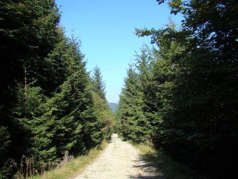 lesní cesty jsou lemovány mravenisti