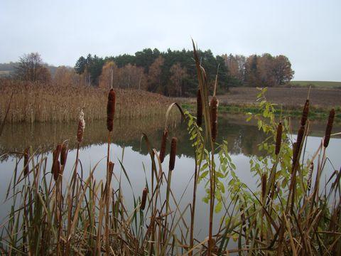 rybník v polích