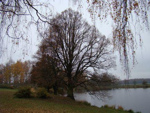 Roątýnský rybník u Telče