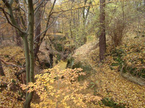 romantické průchody v podzimním lese