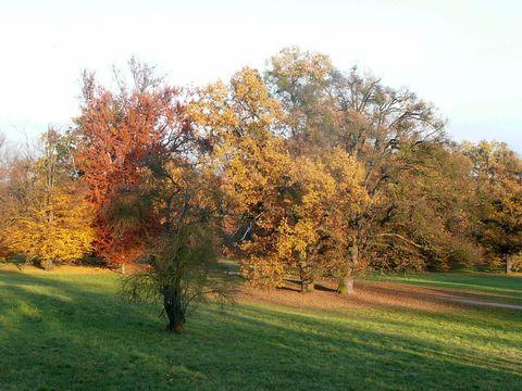 stromy zalité sluncem