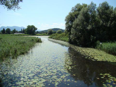 jezero v zeleném převleku