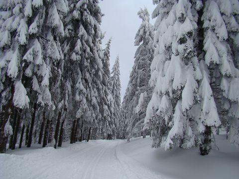 sněhové závoje