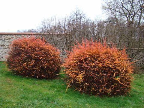 ohnivé barvy podzimu