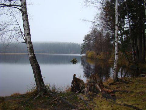 Velký pařezitý rybník 1