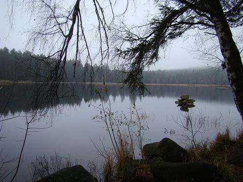 Velký pařezitý rybník 2