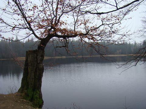 Velký pařezitý rybník 3