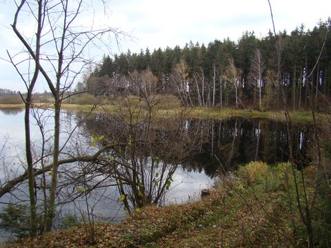 rybník Bor 1