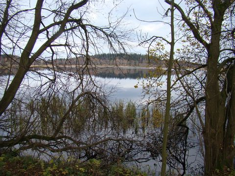 rybník Bor 2