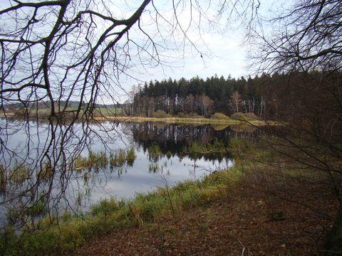 rybník Bor 3
