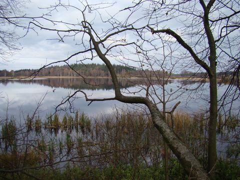 rybník Bor 4