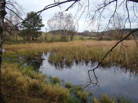 rybník Bor 6