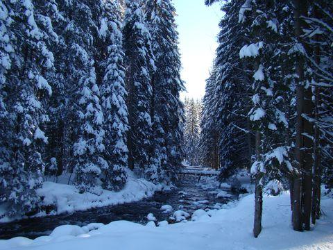 Prášilský potok 2