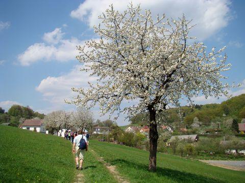 z Vysočiny jsme přišli naproti rozkvetlému jaru