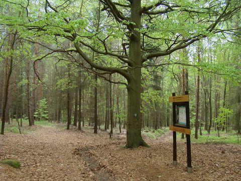 stezka Lesem Království, zastávka U Buku