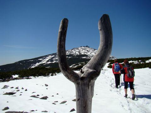 po hřebeni Svorové hory ke Sněžce