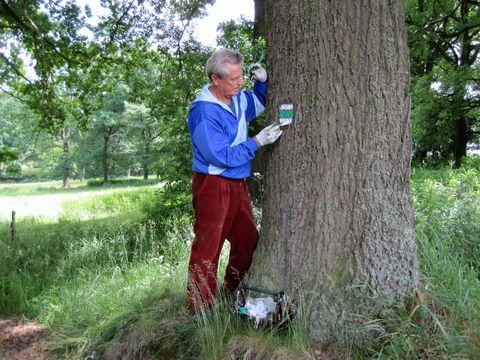 důvěrný rozhovor se stromem