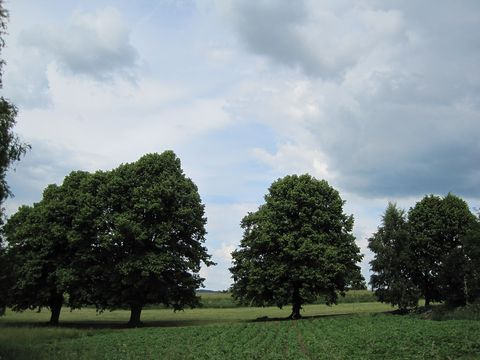 stromořadí na Křížové cestě u Třeště