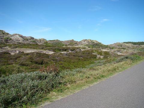 cesta v dunách