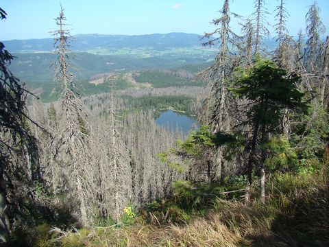 Plešné jezero z Kučerovy vyhlídky