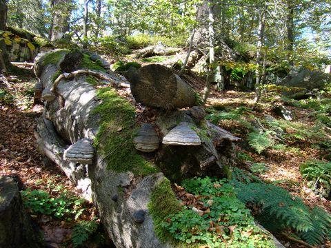 lesy na hřebeni Čerchova