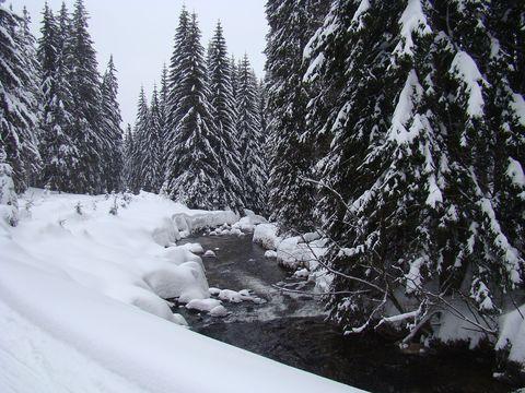 odměnová cesta údolím Prášilského potoka