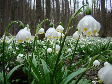 diamantové kapky deště zvýraznily křehkost květů