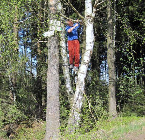 je třeba vyřezat větve a zviditelnit směrovky