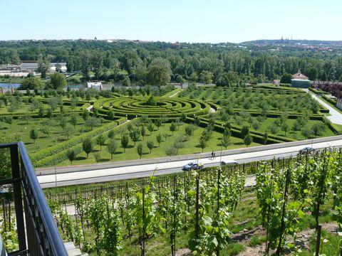 pohled z vinice