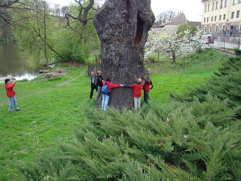 dnes obléhají Zizkův dub turisté