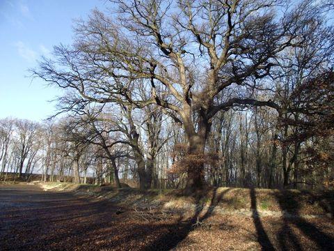 stromy jsou krásné ve všech ročních dobách