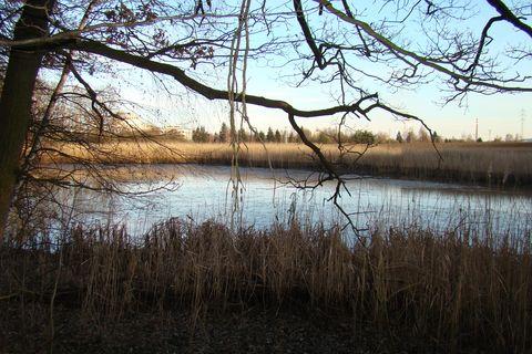 rybník blízko Bukovna II