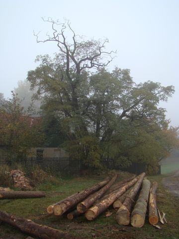 mlha u Vlčího dolu