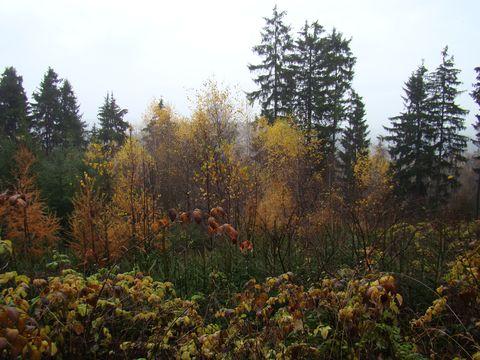 barvy pozdního podzimu