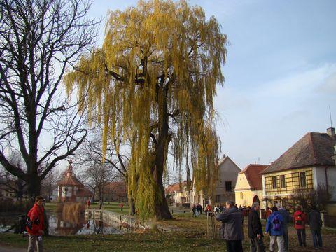 náves s rybníkem a kaplí sv.Martina v Třebízi