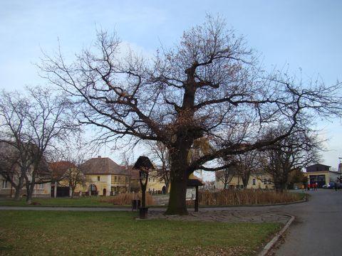 náves v Třebízi - nechybí zvonička ani strom-starosta
