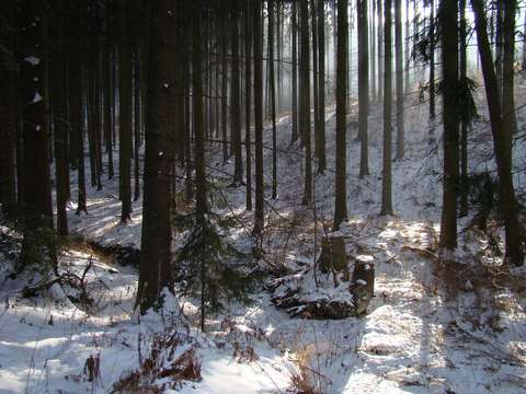 polední les