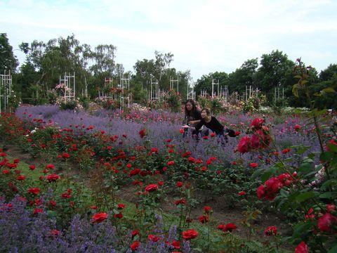 japonské víly v růľové zahradě na Petříně