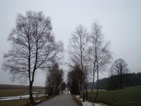 silnička v okolí Polné