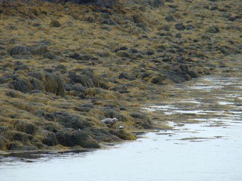 tulení matka s mládětem
