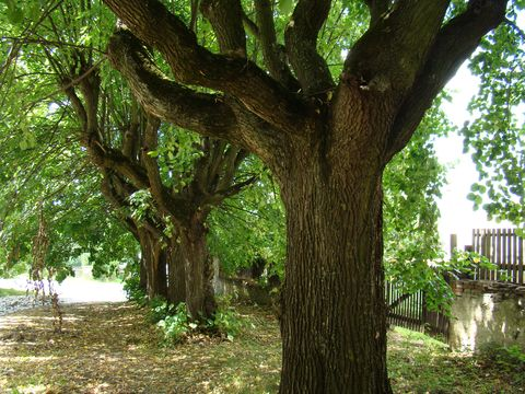 stromy odvádějí pozornost od rozvalin