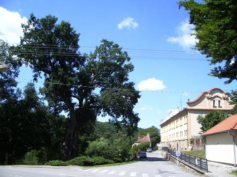 ®iľkův dub