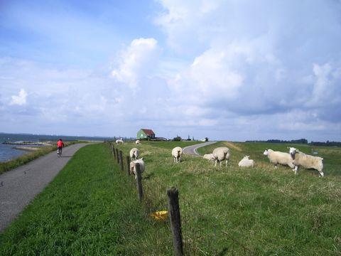 obrázek z Holandska