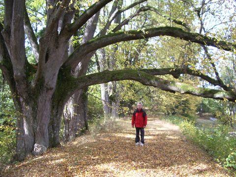 staré stromy