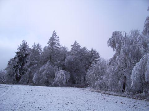 ledová krása (u Stříbrného dvora)