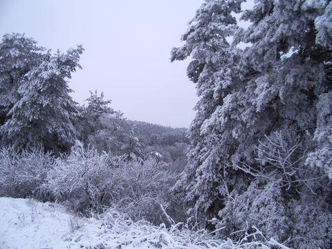 údolí Brtničky