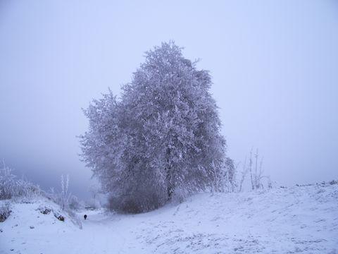 strom I.
