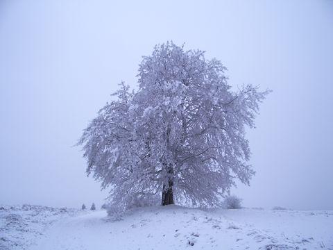 strom II.